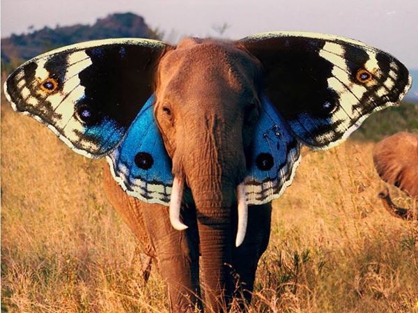 Elephants and Butterflies